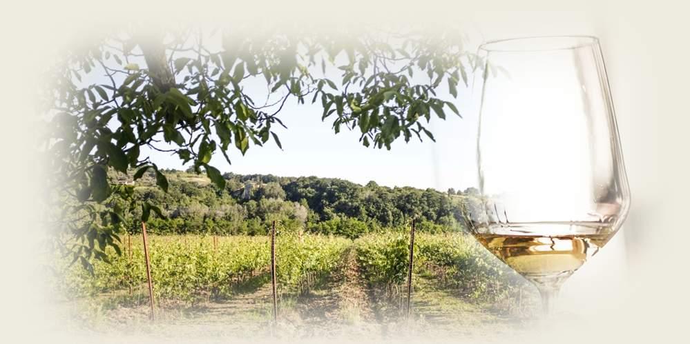 """""""Nel cuore del vino"""" – Cena e degustazione"""