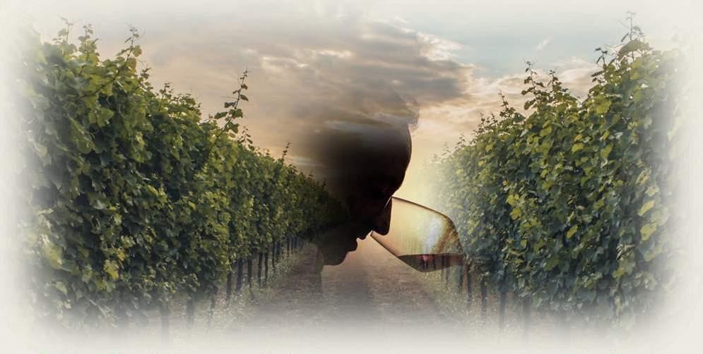 """""""Tipico"""" – Corso su vino e vitigni autoctoni italiani"""