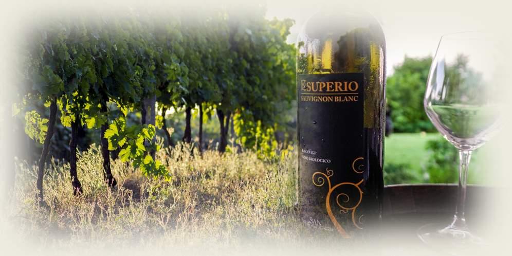 """""""La magia del vino"""" – Vendemmia, degustazione e cena"""