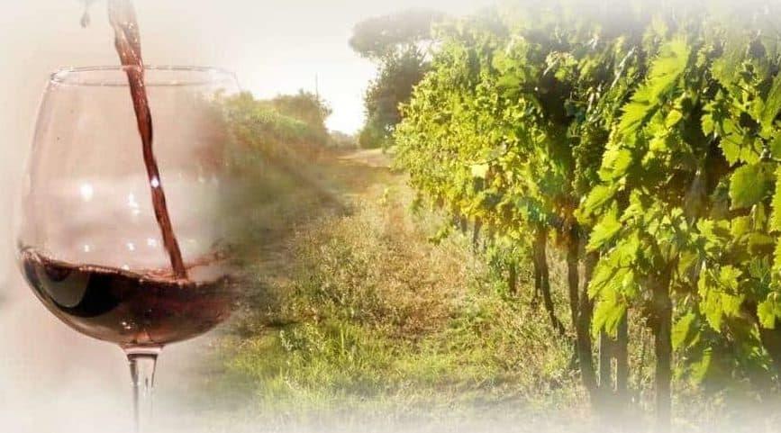 """Wine tour e viaggio """"La vendemmia nel Chianti"""""""