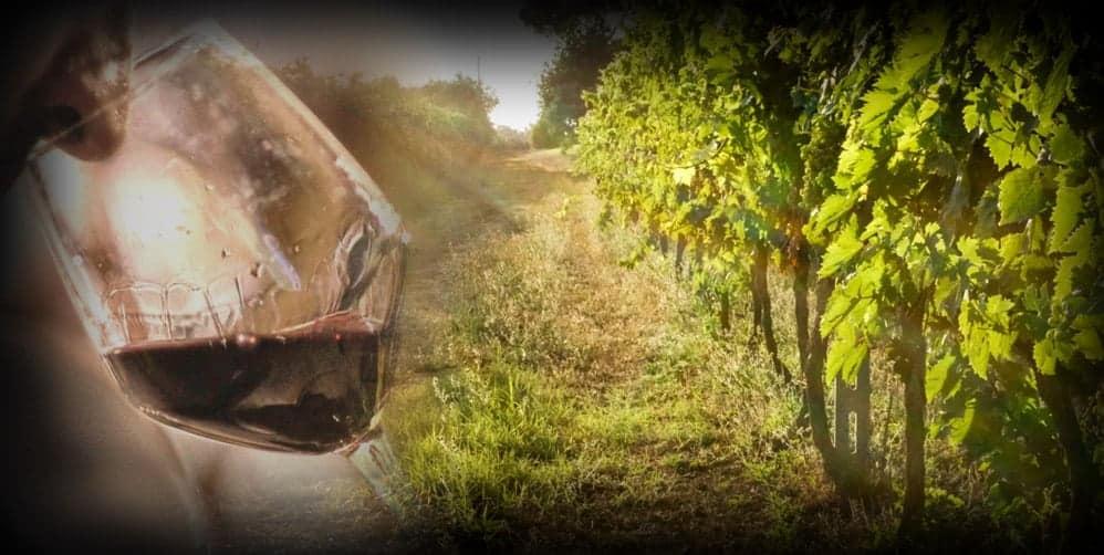 copertina l'italia del vino1 - avvicinamento al vino italiano