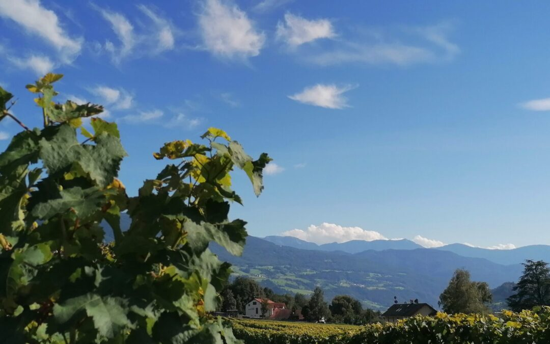 """Corso sul vino italiano """"L'Italia, dagli Appenini alle Alpi"""""""