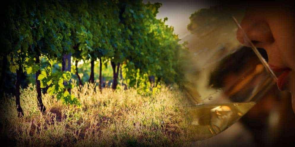 """Corso di avvicinamento al vino """"L'Italia del Vino"""""""