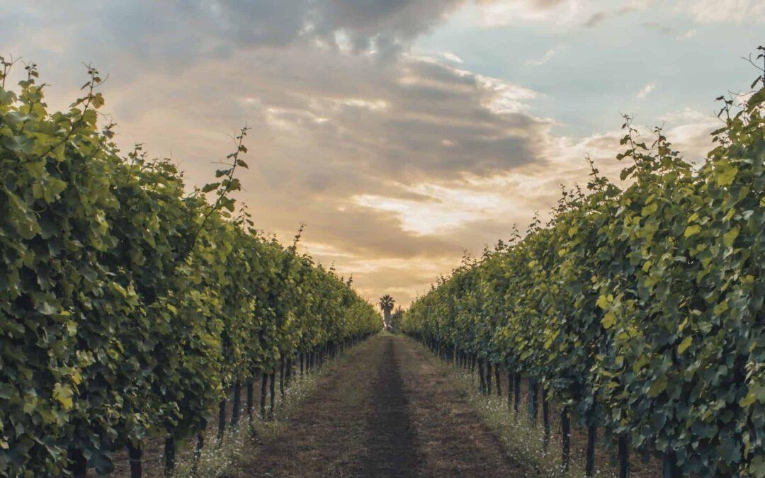"""Corso di avvicinamento al vino """"Il Mondo del Vino"""""""