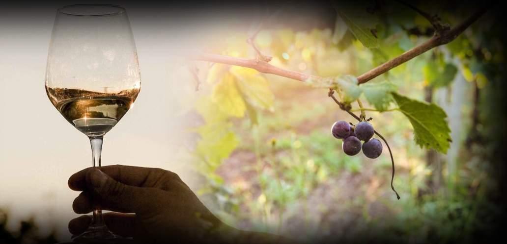 La merenda al tramonto in vigna – Visita, aperitivo e degustazione