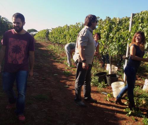 Vendemmia, Degustazione e Cena in Vigna - SAN (27)